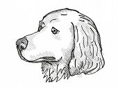 Retro Cartoon Style Drawing Of Head Of A Great Pyrenees, A Domestic Dog Or Canine Breed On Isolated  poster