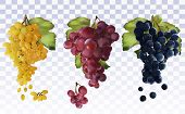 Wine Grapes. Collection With Three Grapes Red, Dark Blue, White. Table Grapes. Icon Set Grapes. 3d R poster