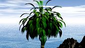 Green Palm Tree