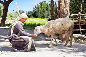 NAZARETH, ISRAEL - APRIL 24: Man dressed as a first-century herder feed his sheep at Nazareth Villag