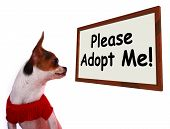 Please Adopt Me Sign Showing Stray Unwanted Canine