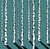 Birch trees on blue