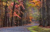Colorful trees by the road in Babcock state park