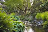 stock photo of portland oregon  - Stream Under the Wooden Bridge at Crystal Springs Rhododendron Garden in Portland Oregon - JPG