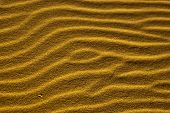 Bright Sand Sidewinders