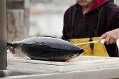 Albacore Fresh Catch