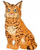 Illustration of wild bobcat