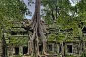 Tree Growing Out Of Angkor Wat Temple