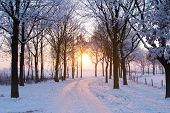 picture of winter landscape  - scenic winter landscape with sunset trough some trees coming - JPG