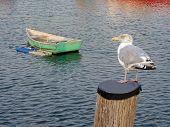 Bird And Rowboat