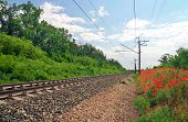 stock photo of olden days  - Rails of the railway among flowers and trees - JPG