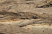 Tree bark. Texture