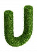 Natural grass letter U
