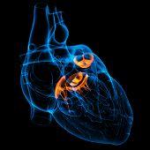3d render Heart valve .