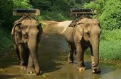 Elephants waiting for tourists