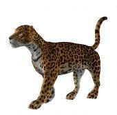 Jaguar Standing