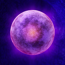 pic of human egg  - Human egg cell medical symbol as a three dimensional microscopic reproductive health concept representing a single ova in the ovulation process for reproduction inside the anatomy of the fertile female body during the menstrual cycle - JPG