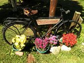 Bicycle Welcome Sign Flowers
