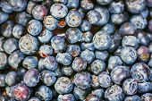 Fresh Blueberries (bilberries) Background