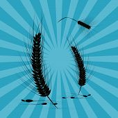 Vector Ears of Wheat Black Silhouette on Retro Blue Background