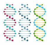 image of double helix  - Three variants of double strand DNA molecules showing the nucleotide pairs in a double helix  vector illustration - JPG