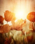 Grunge style photo of beautiful red poppies flower field in sunset light, retro style picture, abstract floral background, beauty of nature