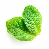 Two Fresh Mint Leaves Isolated On White Background.