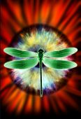 dragonfly and eye