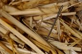 Macro of needle in a haystack