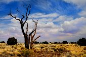 Nice simple image of a lone tree in the desert