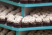 Trays Of Cupcakes Closeup
