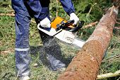 picture of chainsaw  - Lumberjack logger worker in protective gear cutting firewood timber tree in forest with chainsaw - JPG