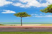Almond Tree On Beach Blue Water And Sky Background, Vila Velha, Espirito Santo,brazil