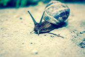 picture of hermaphrodite  - Snail close - JPG