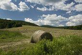 Summer Hay Field