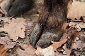 Deer Hoof
