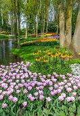Tulips In Keukenhof - Largest Flower Garden In Holland