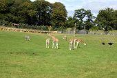 zoo. safari. safari park