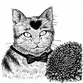 Cat with aster flower hand drawn.