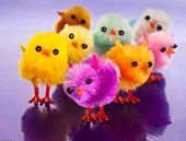 Colourful Spring Chicks