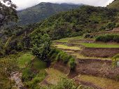 Flooded Rice Paddy Fields In The Lower Himalayas During Monsoon
