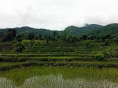 Himalayan Rice Paddy Fields During Overcast Monsoon Day