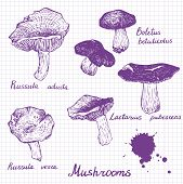 Set of linear drawing mushrooms