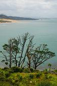 Landscape In Kauri