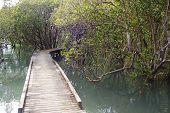 Mangrove Track Near Russell