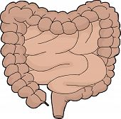 Isolated Digestive Tract