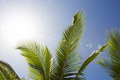 Beautiful Palm Trees