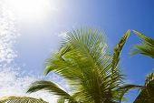 Beautiful Palm Trees With Blue Sky And White Clouds