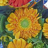 vibrant orange Gerber daisy flower