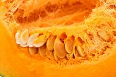 Closeup Of Ripe Pumpkin